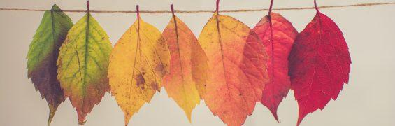 Crisp Fall Leaves (photo by Chris Lawton)