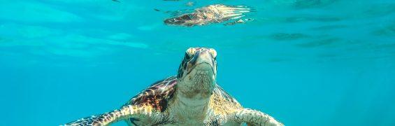 Turtle Underwater (Photo by Cédric Frixon on Unsplash)