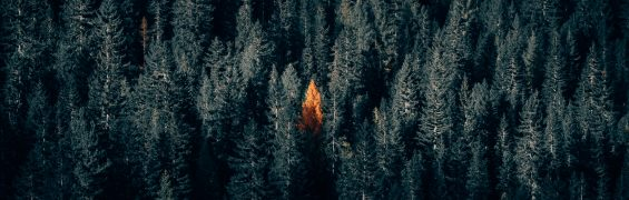 Light thru the trees (Photo by Philipp Pilz on Unsplash)