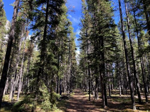 Hoodoos Trail Forest