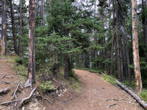 Hiking up the Sleeping Buffalo trail